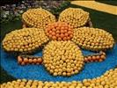 Fleur du Citron